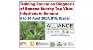 Event: Training course on Diagnosis of Banana Bunchy Top Virus Infections in Banana